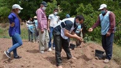 صورة انطلاق المرحلة الثانية لزراعة الزعفران بجماعة آيت بولي بأزيلال بتكلفة مالية تناهز 26 مليون درهم